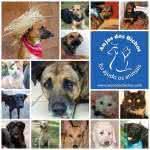 Adoção de Animais em Barueri – Locais