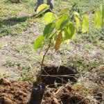 Barueri tem Pista de Cooper com Novas Mudas de Árvores